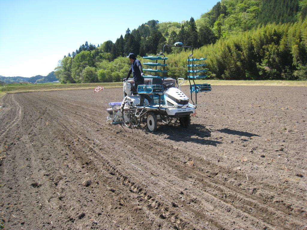 鉄コーティング種子の折衷直播で 播種後に水を入れます。